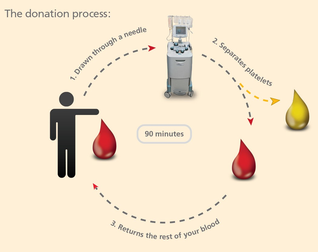 Platelet donation process graphic