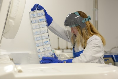 A scientist takes some boxes out of a freezer