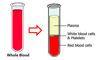 Whole blood is seprated into components