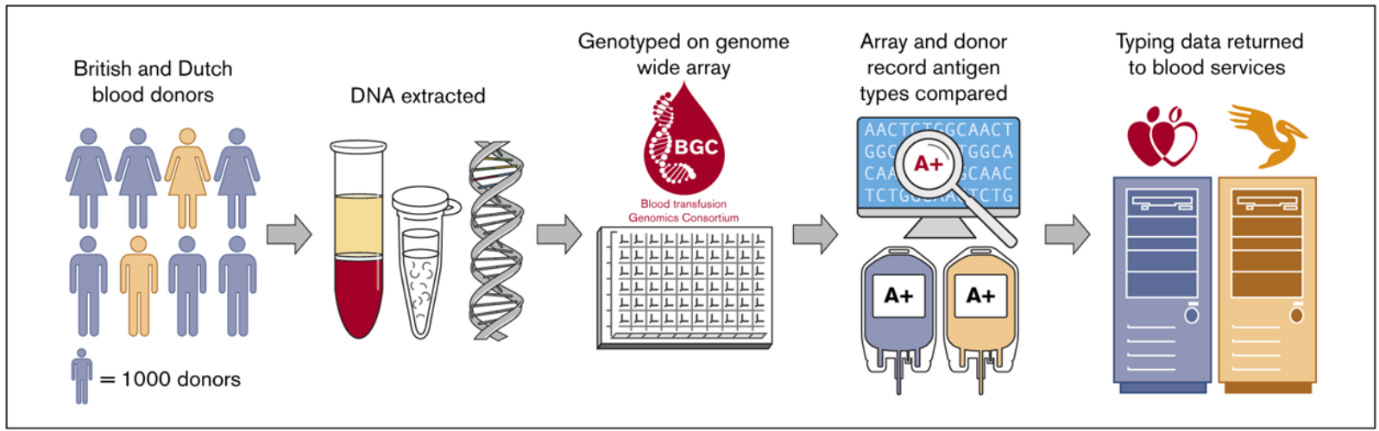 The genotyping process