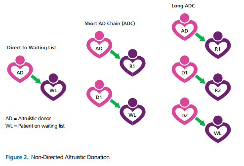 Altruistic Donor Chain - direct to waiting list, short altruistic donor chain and long altruistic donor chain