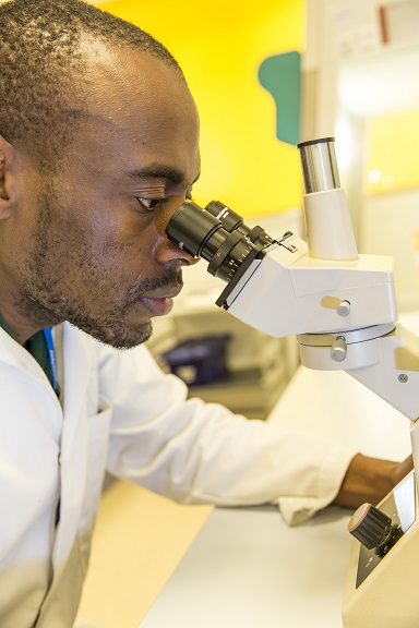 A scientist using a microscope